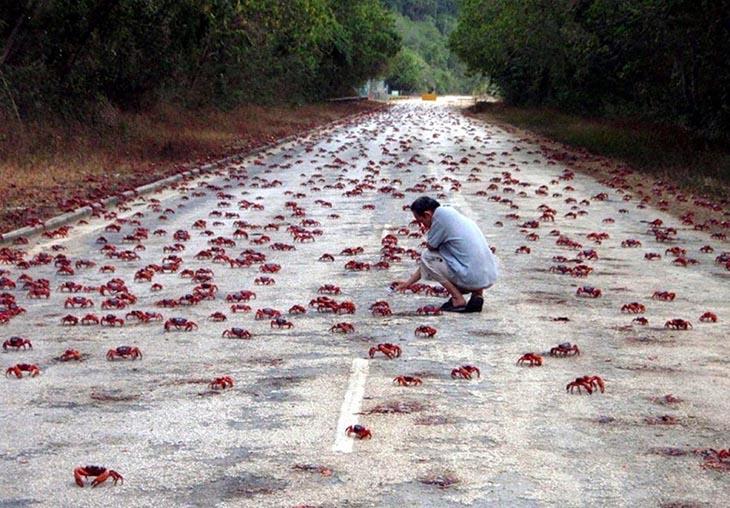 Jalanan Berubah Jadi Warna Merah, Ini Penyebabnya