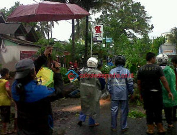 Pohon Mahoni Tumbang Ganggu Jalur Utama Pangandaran - Cijulang