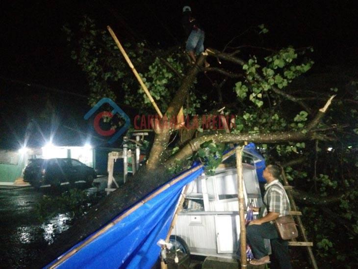 Pohon Waru di Pangandaran Tumbang Timpa Gerobak Tahu Pedas