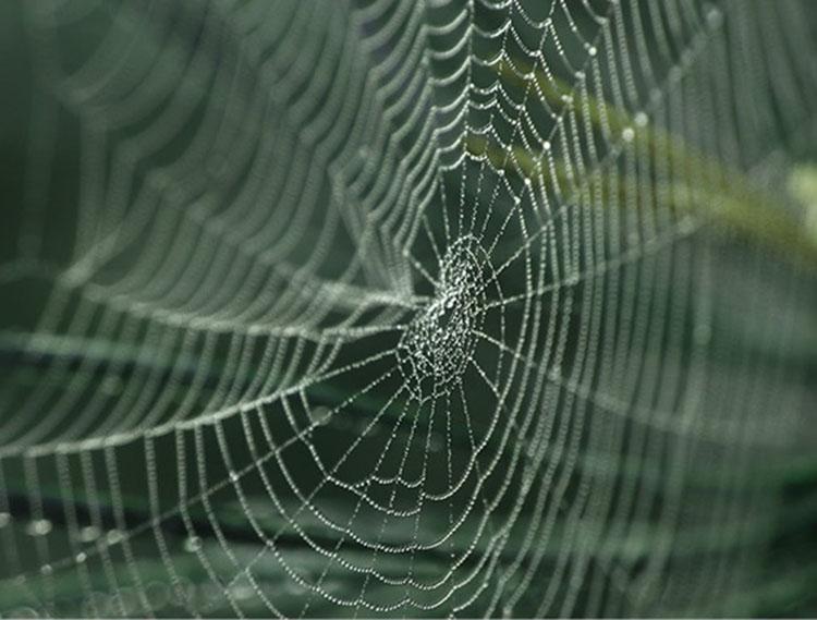 Kedepan, Kekuatan Super Jaring Laba-laba Bermanfaat untuk Manusia