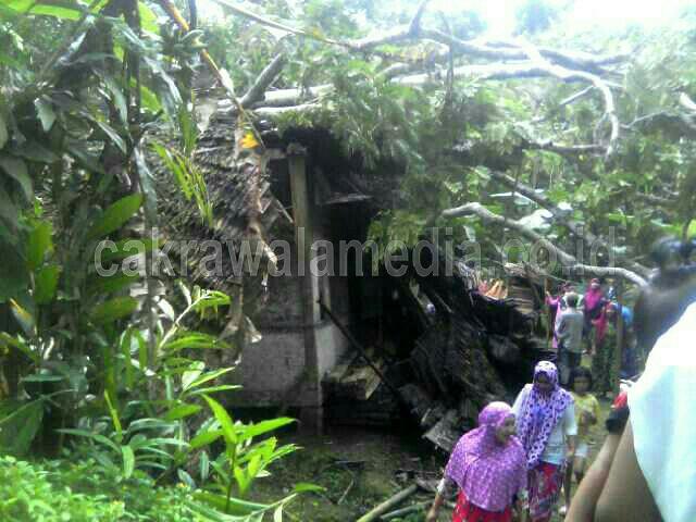 Diterjang Angin Kencang, Pohon Besar Tumbang dan Menimpa Rumah Warga