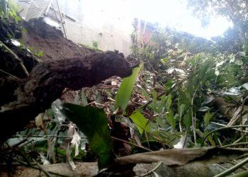 3 Rumah berukuran type 35 dan 45 di Perumahan Cikunir Raya Desa Cikadongdong Kab Tasikmalaya ini, nyaris terbawa longsoroan tanah dari ketinggian tebih 10 meter, pada Senin ( 05/11 ), sekira pukul 05.00 wib.