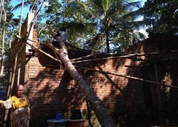 Hujan Disertai Angin Kencang, Puluhan Rumah di Tamansari Tertimpa Pohon