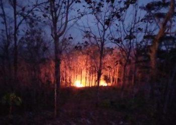 Alhamdulillah, Kebun Jati Seluas Dua Hektare Selamat Dari Kebakaran