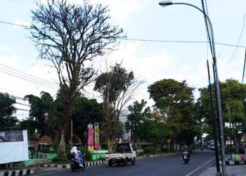 Tampak sejumlah pohon besar dan tua di Jalan RE Martadinata Kota Tasikmalaya